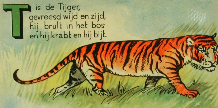 T is de tijger